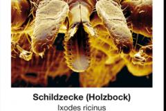 Ungeziefer_02_Schildzecke
